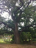 Image for The Old Oak Tree