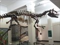 Image for Dinosaur Exhibit, Auckland Museum - Auckland, New Zealand