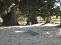 Image for Willowside Road Cemetery - Santa Rosa, CA