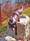Image for Stalking Fox - Waco, TX