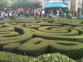 Image for France's Hedge Maze - Lake Buena Vista, FL