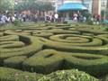 Image for France's Hedge Maze - Lake Buena Vista, FL