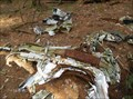 Image for Quabbin Reservoir Starfire crash site
