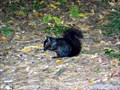 Image for Black Squirrel Town - Westfield, MA