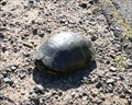 Image for Blanding Turtle Crossing - Spooner, WI