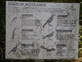 Image for Birds of Woodlands- Swallow Rock Reach Walking Track - Ebenezer