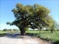 Image for Wedding Oak - San Saba, TX