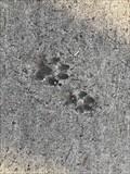 Image for Empreintes de pattes de Canidés -