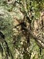 Image for L'arbre mangeur de clôture - Bury, Qc, CANADA