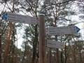 Image for Arrows in the Wood near Burrweiler - RLP / Germany