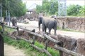 Image for Elephants at Busch Gardens - Tampa, FL.