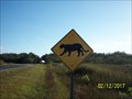 Image for Florida Panther Crossing - Everglades National Park Main Road