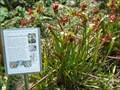 Image for Kanapaha Botanical Gardens Carnivorous Plants - Gainesville, FL (LEGACY)