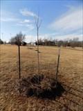 Image for Joel Clement tree - Edmond, OK