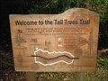 Image for 'You Are Here' - Tall Trees Trail, New Forest, South Hampshire, UK