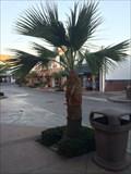 Image for Caroline Wilson Bogert - Newport Beach, CA