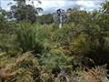 Image for Pinanpinga TP, Knodingbul Forest, NSW