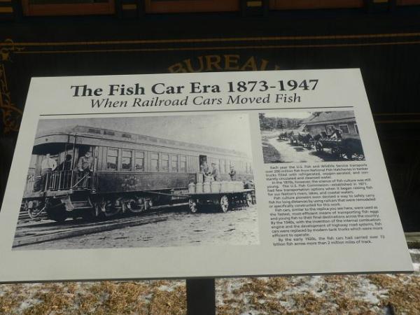 Fish Car Era
