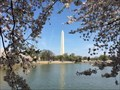 Image for Cherry Blossom Festival - Washington, DC