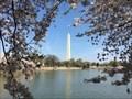Image for Cherry Blossom Festival - Washington, DC