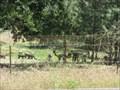 Image for Retiredice Alpacas Ranch - Somerset, CA