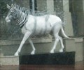 Image for Quagga, Cape Town, South Africa