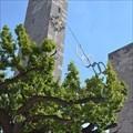 Image for Podbielski Oak Tree - Berlin, Germany