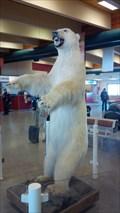Image for Polar Bear - Inuvik, Northwest Territories