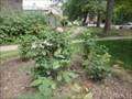 Image for Queen Elizabeth II Rose Garden  -  Toronto, Ontario