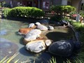 Image for Koi Pond - San Diego, CA