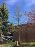 Image for Donald M. Gibson Tree - Tillsonburg, ON