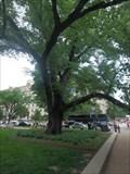 Image for Smithsonian Witness Elm - Washington, DC