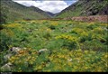 Image for Prangos ferulacea meadows - Degirmenalti Köyü (Bitlis province, East Turkey)