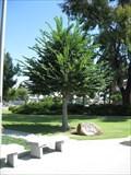 Image for The Washington Elm - Gardena, CA