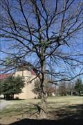 Image for Brother Daniel Lynch -- St. Edward's University, Austin TX