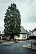 Image for Berg-Mammutbaum, Niederkassel, NRW, Germany