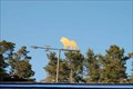 Image for Lion's club Weather Vane - Cambria California