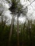 Image for les pins de Romans - Romans,France