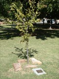 Image for Charlie Hanger tree - Perry, OK