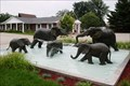 Image for Elephants at Play