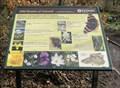 Image for Wild Flowers Of Oakwell - Birstall, UK