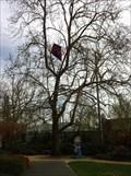 Image for Kite Eating Tree
