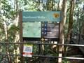 Image for Rainforest Walks - Minnamurra Rainforest, Jamberoo, NSW