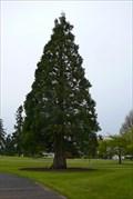 Image for Washington State Capitol Moon Tree - Olympia, Washington