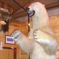 Image for Granzella's Polar Bear - Williams, CA