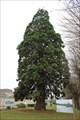 Image for Le Séquoia de la République - Chauvigny, France