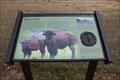 Image for Bison Pasture - Sulphur, OK