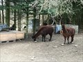 Image for Feed the alpacas - Lindehuset - Krarup, Danmark