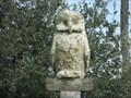 Image for Great Grey Owl - Ormond Beach, FL