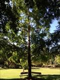 Image for Sister Samuel Conlan, O.P - San Rafael, CA